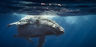 Bitcoin Whales Awaken: What Does This Mean for BTC Rate?
