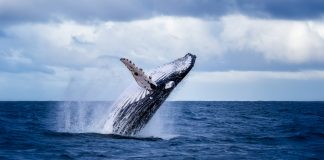 """Crypto Company Severs McAfee Ties Obviously Concerning """"Whale F ** king"""" Remarks"""