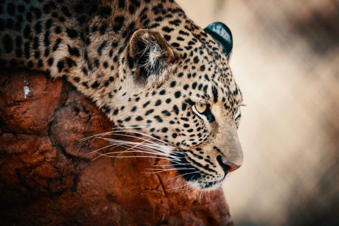 Nike, Facebook, and Now Jaguar: Big Corporations Rely On Crypto