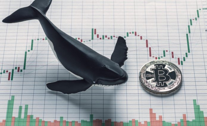 Expert: Continuous Bitcoin Rally Driven by a Handful of Strategic Purchasers; Where Will They Send Out BTC Next?