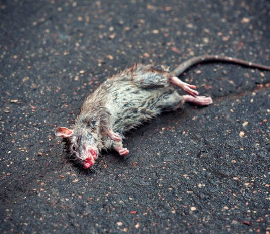 Max Keiser: Buffet's Right, Bitcoin is Rat Toxin and He's the Rat