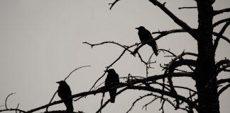 3 Black Crows: Bitcoin Month-to-month Chart Types Threatening Turnaround Pattern