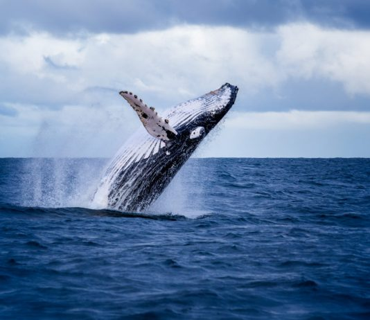 More Whales Are Hoarding Bitcoin After Building Up Throughout Bearish Market