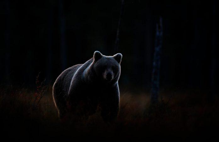 Be Careful: Hidden Bear Divergence Might Spell Problem for Bitcoin