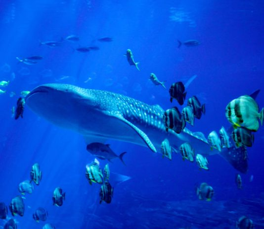 Causal Sequence: XRP Whales Purchase Up A Sea of Little Fish Offering