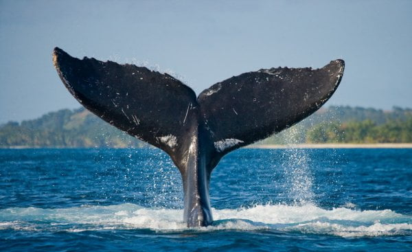 Information Reveals Whales Are Packing Up On Bitcoin, However Why?