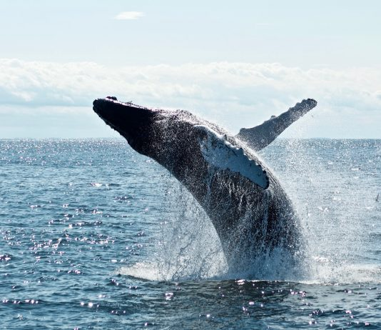 In Spite Of 50% Drop From $20 Highs, Chainlink Whales Remain Bullish
