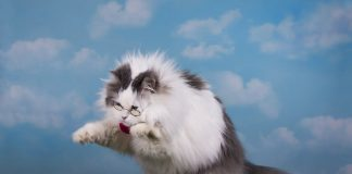 Ripple's XRP Swells 40% In Spite Of Delisting Concerns; Dead Feline Bounce?