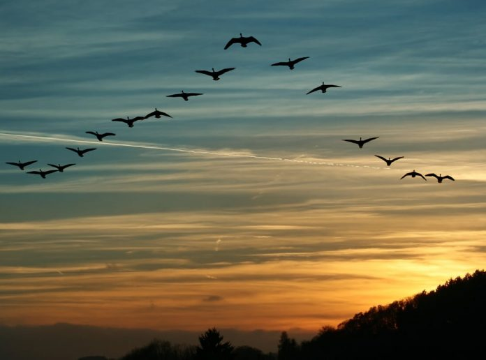 Cardano Creator Expects The Birds to Land in March as ADA Belief Recuperates
