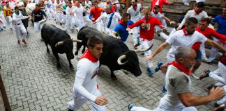 Prepared To Run: Bitcoin Forms Finest Carrying Out Booming Market Bottoming Pattern