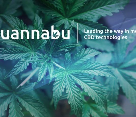 Everything about Quannabu, the Cryptocurrency Developed for the Marijuana Market