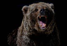 Bitcoin Bearish Signals Go Off In Spite Of Healing Above $44 k, Dead Feline's Bounce?